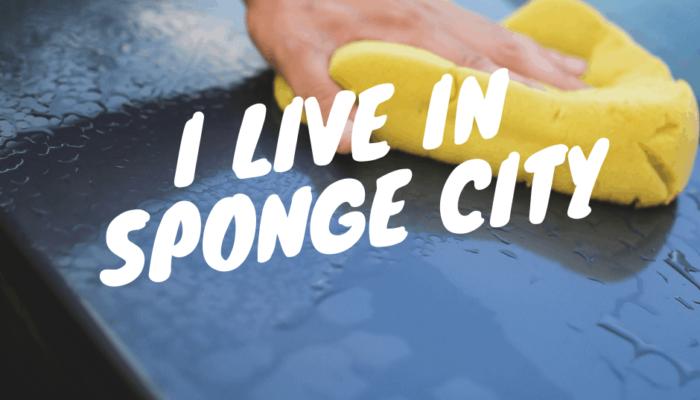 """""""I live in Sponge City!"""""""